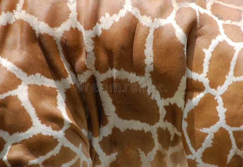 长颈鹿模式皮肤 库存图片