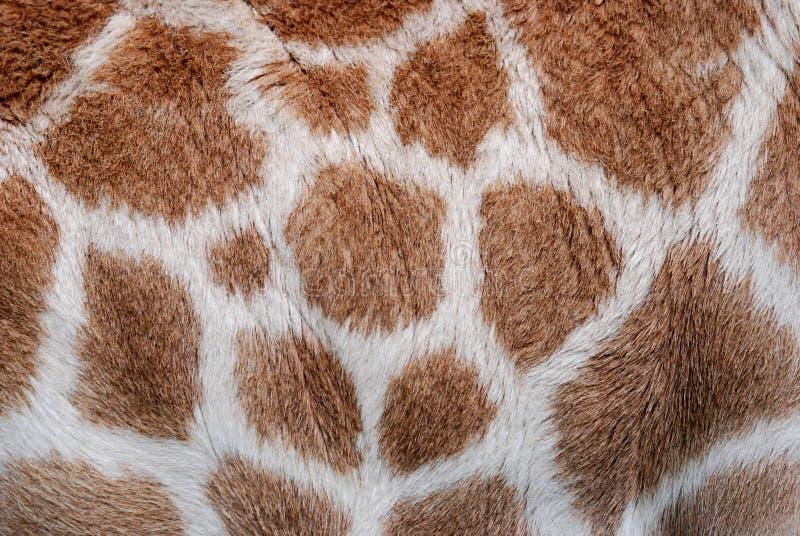 长颈鹿模式 库存照片