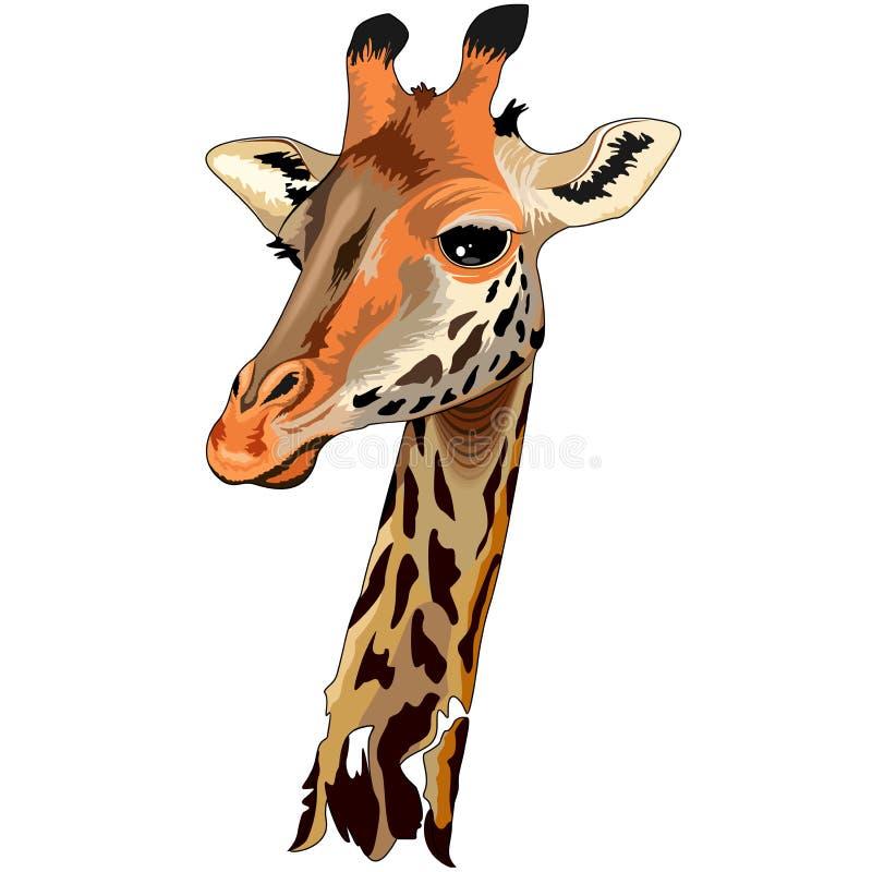 长颈鹿狂放的非洲动物画象 皇族释放例证