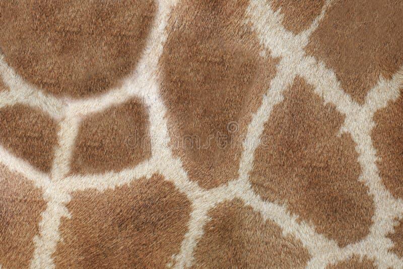 长颈鹿皮革皮肤背景表面  免版税图库摄影