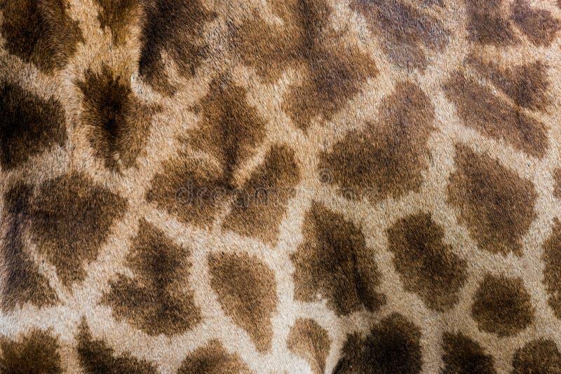长颈鹿` s皮肤样式 免版税库存照片