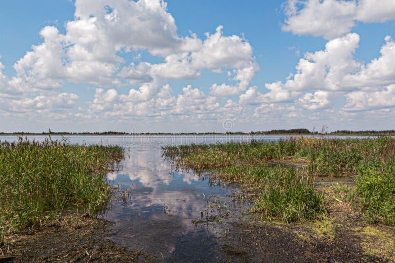 长满与芦苇,湖岸 免版税图库摄影