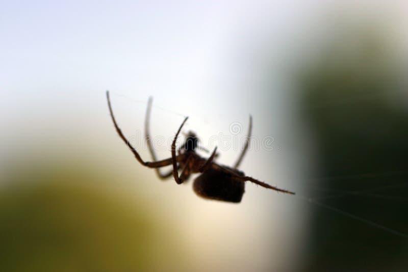 门廊剪影蜘蛛 免版税库存照片