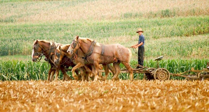 门诺派中的严紧派的农夫和耕种马 免版税库存图片