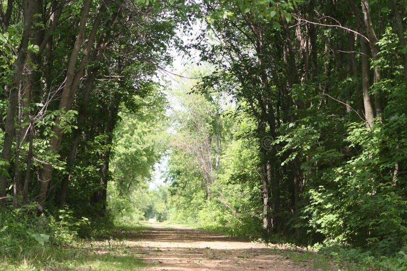 门道入口森林 库存图片