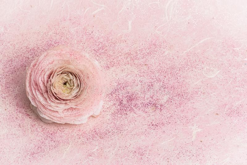 闪光金属片的桃红色玫瑰 免版税库存图片