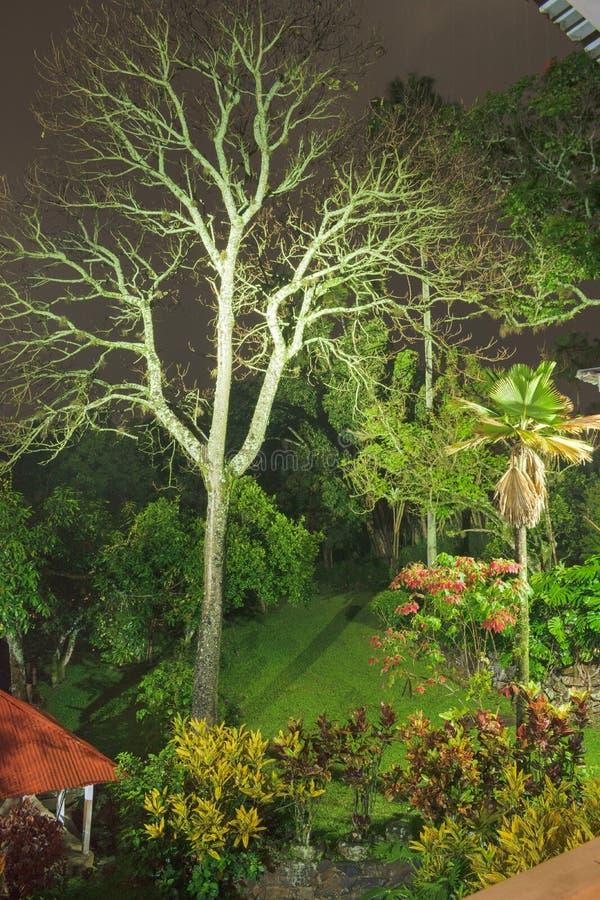 闪电树 库存图片