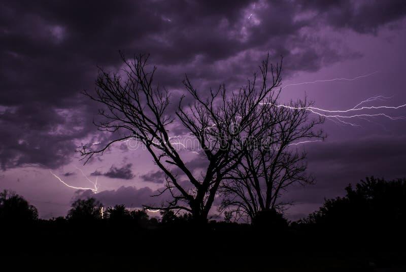 闪电风暴在堪萨斯夏夜现出轮廓树 库存图片