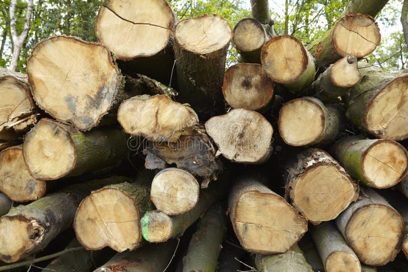 阔叶烟草的森林-堆树树干 免版税库存图片