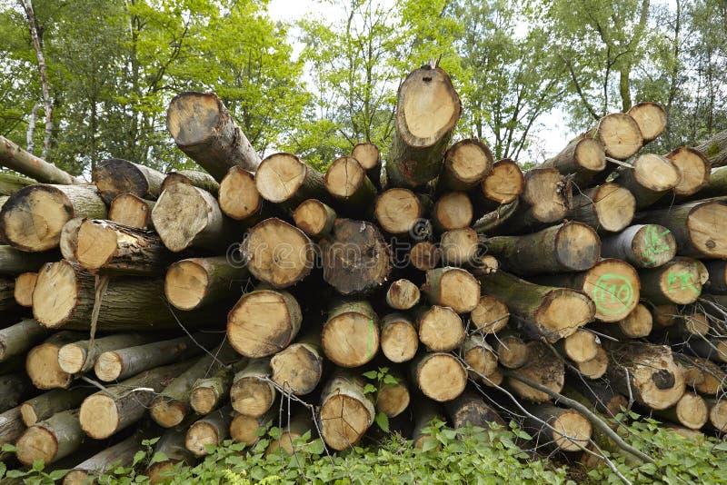 阔叶烟草的森林-堆树树干 库存照片