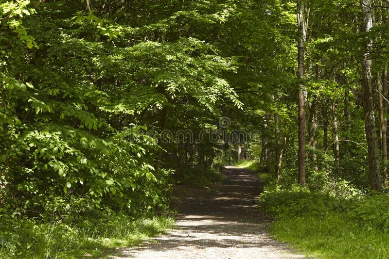阔叶烟草的森林-森林道路 免版税库存照片