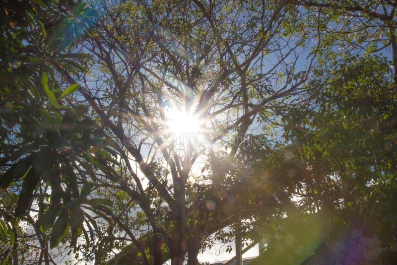 阳光亮光通过分支 库存图片