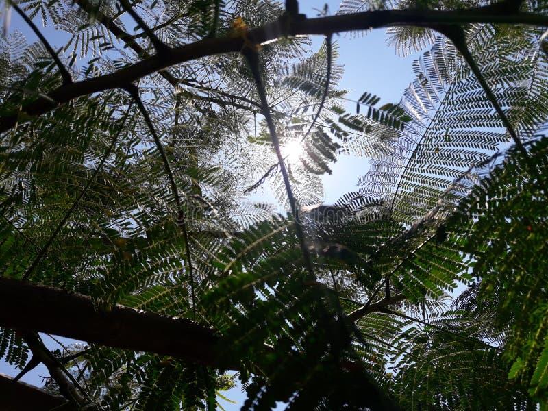 阳光和结构树 免版税库存照片