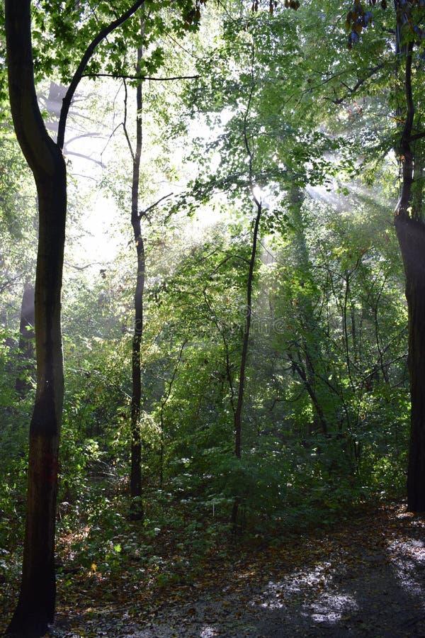 阳光和自然 免版税库存照片