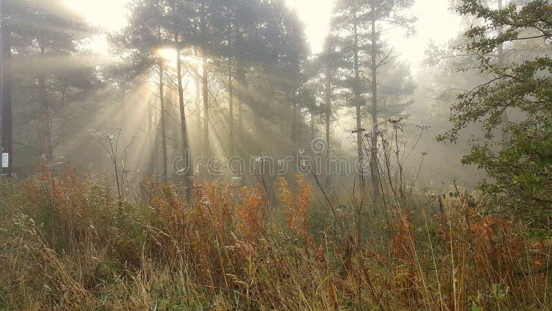 阳光在一个有薄雾的森林里 库存图片