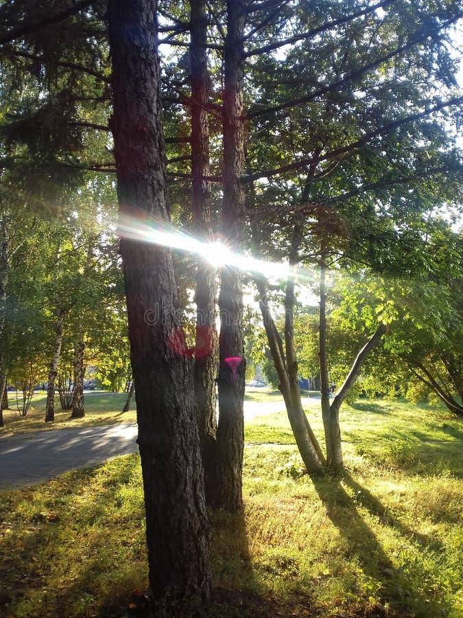 阳光在公园 免版税库存照片