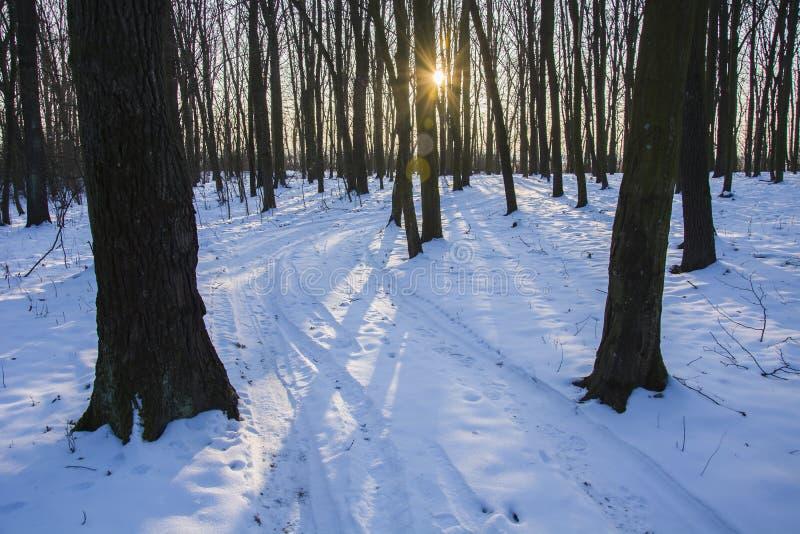 阳光在冬天森林里 免版税库存图片