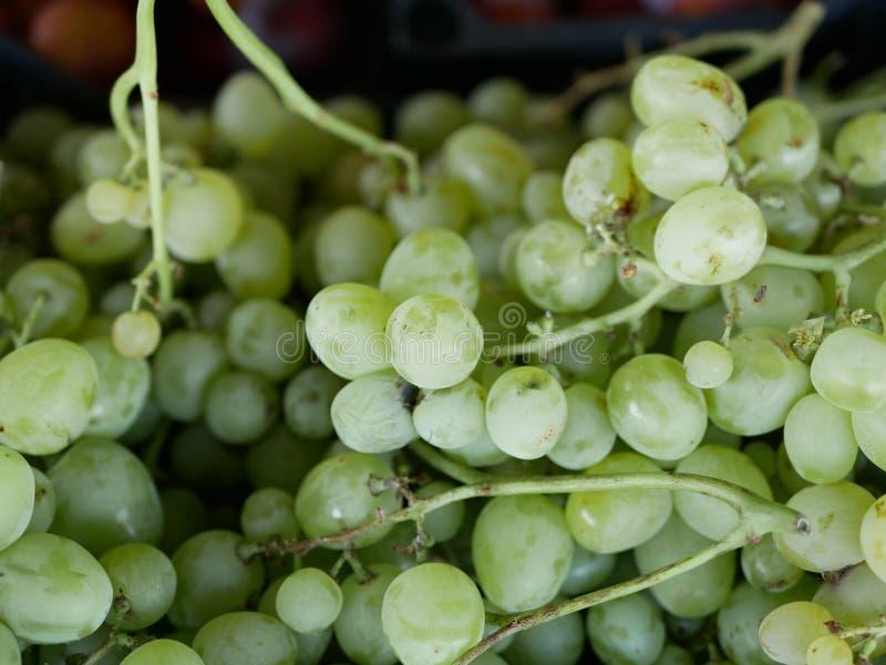 阳光明媚的夏日里,树叶草背的葡萄树上的成熟绿色葡萄 鲜果 天然维生素 生态 免版税库存照片