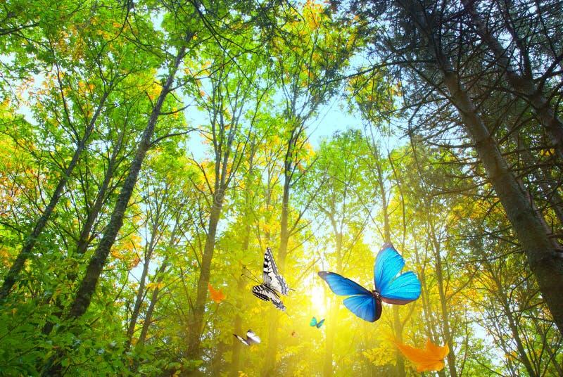 阳光森林 免版税库存照片
