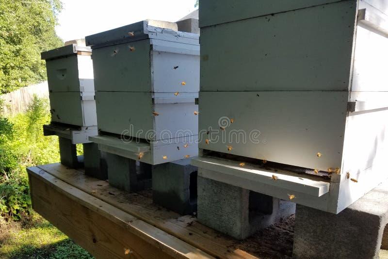 阳光照亮飞行的蜂蜜蜂在蜂蜂房 免版税图库摄影