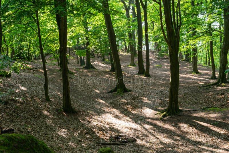 阳光由后照的树木繁茂的林木 免版税库存照片