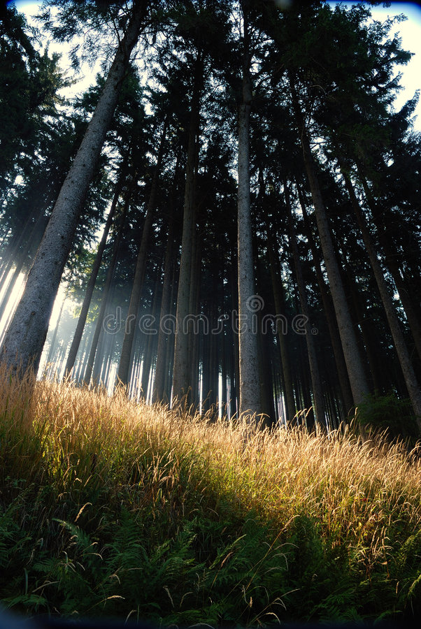 阳光结构树 库存图片