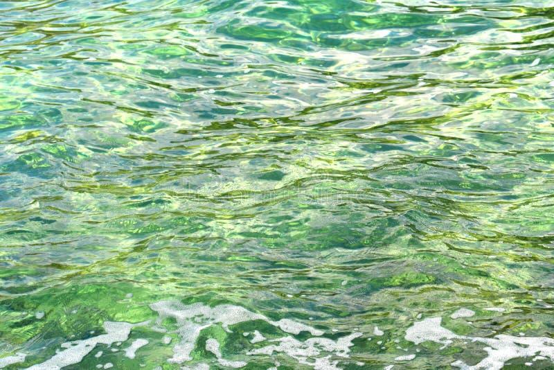 阳光绿浪表面上的微风 免版税库存图片