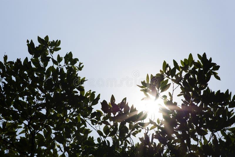 阳光通过与云彩天空的绿色树 库存图片