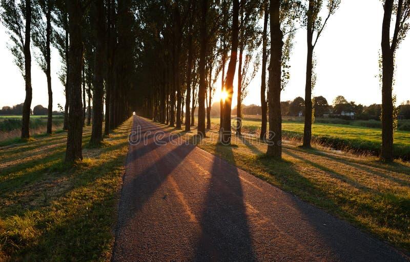 阳光通过在日出以后的树行 免版税库存照片
