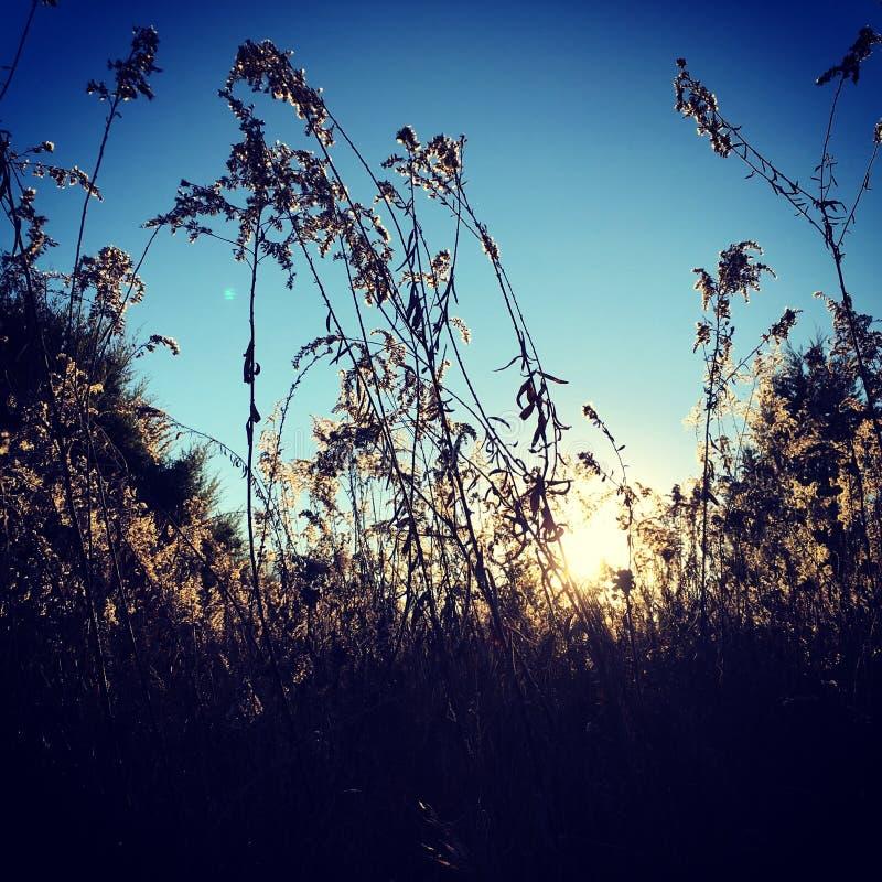 阳光通过干草 库存照片
