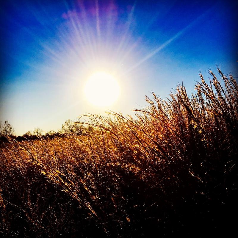 阳光通过干草 免版税库存照片