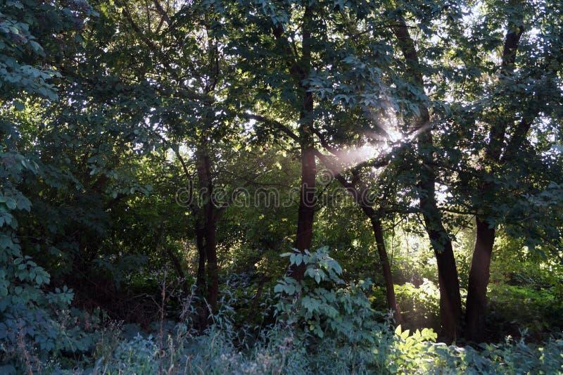 阳光通过树 库存图片