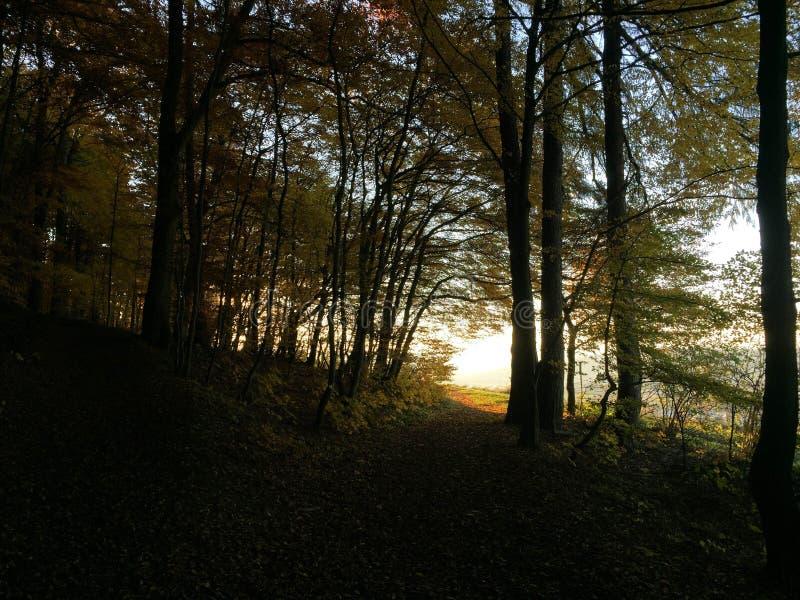 阳光通过森林在秋天 免版税库存照片