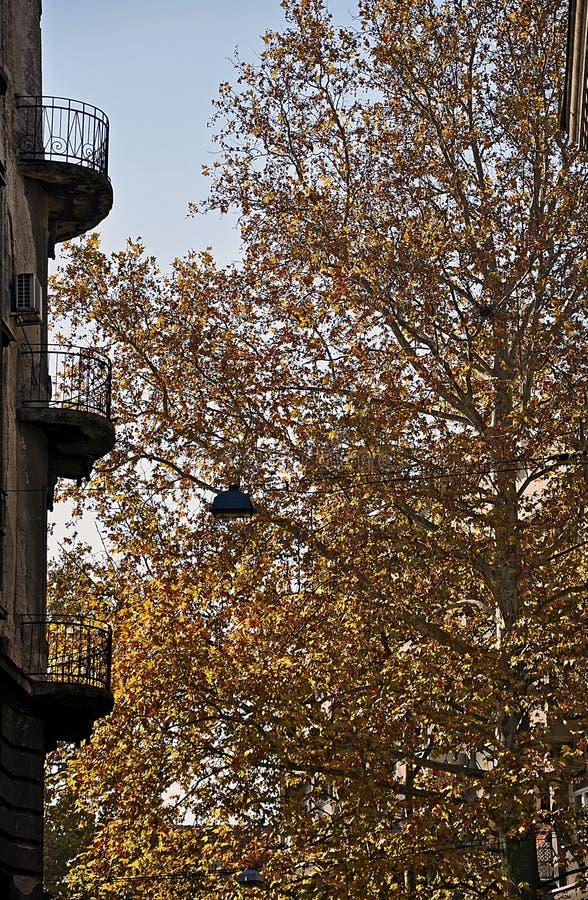 阳台和秋天树 图库摄影
