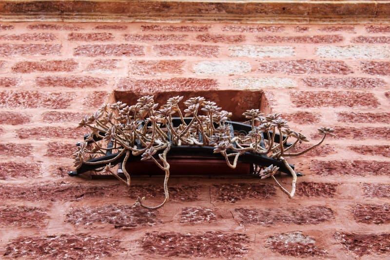 阳台和红色石门面的五颜六色的Echeveria植物 免版税库存图片