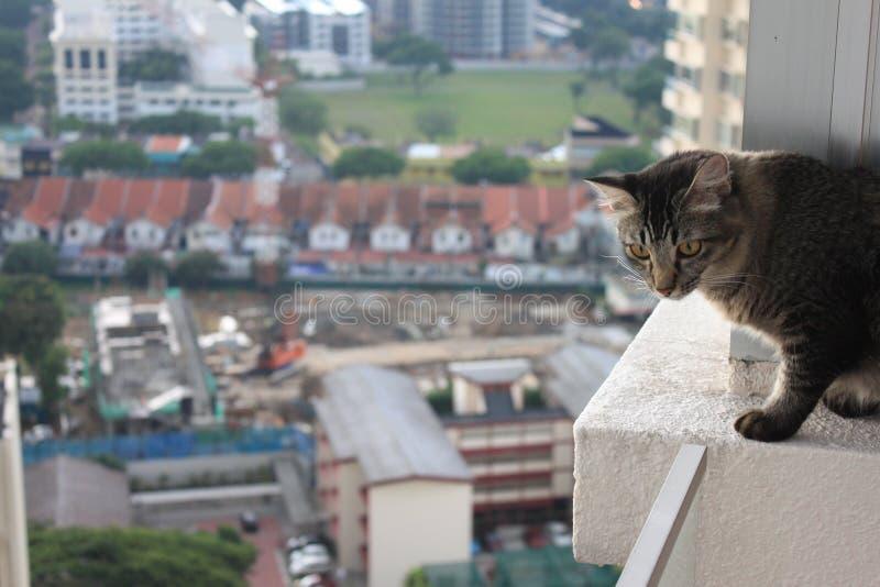 阳台猫边缘 库存图片