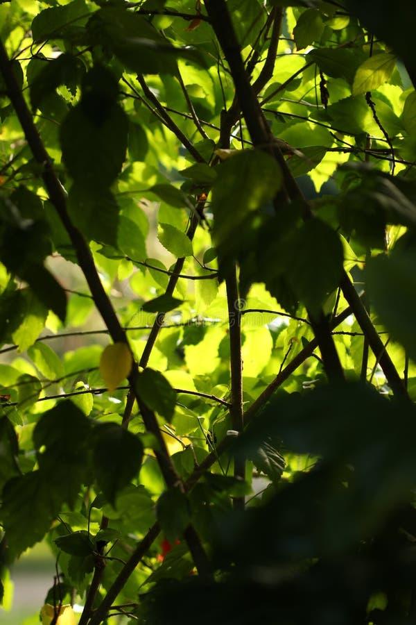 阴影在绿色森林里 库存图片