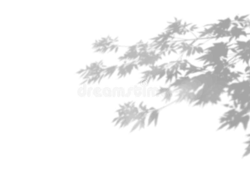 阴影夏天背景分支在白色墙壁上的叶子 E 皇族释放例证