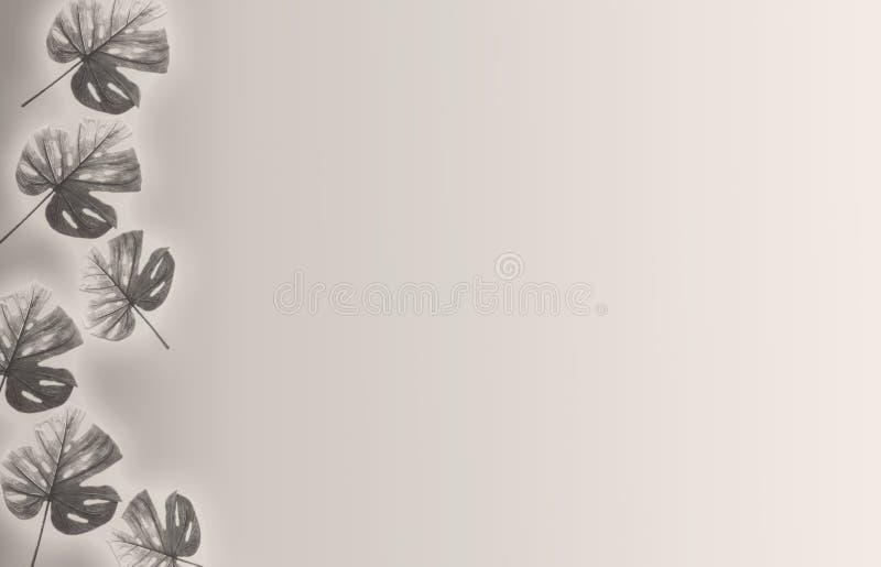 阴影棕榈叶抽象背景在白色墙壁上的 文本的白色和黑空间 免版税库存照片