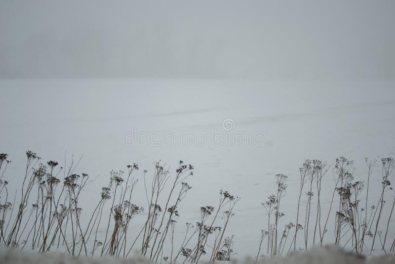 阴暗白色多雪的领域的冬天冥想的风景 免版税库存照片