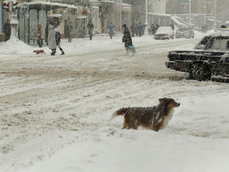 阴暗自然灾害冬天,飞雪,大雪被麻痹的城市汽车路,崩溃 积雪的旋风 免版税图库摄影