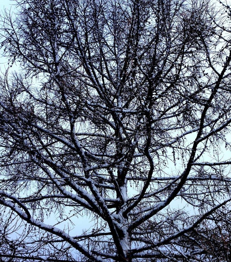 阴沉的树和冬日 免版税库存照片