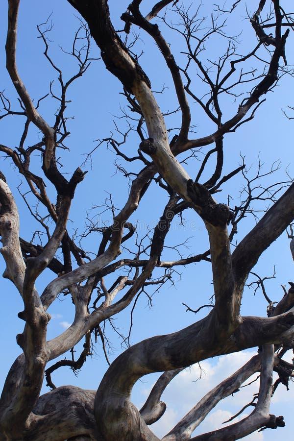 阴沉的死的树干分支与天空的 免版税库存照片