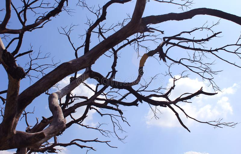阴沉的死的树干分支与天空的 库存照片