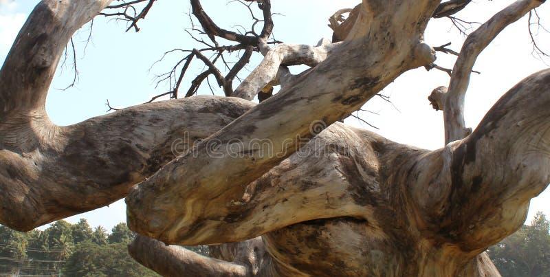 阴沉的死的树干分支与天空的 免版税图库摄影