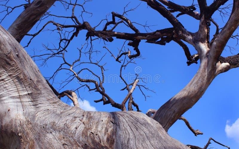 阴沉的死的树干分支与天空的 免版税库存图片