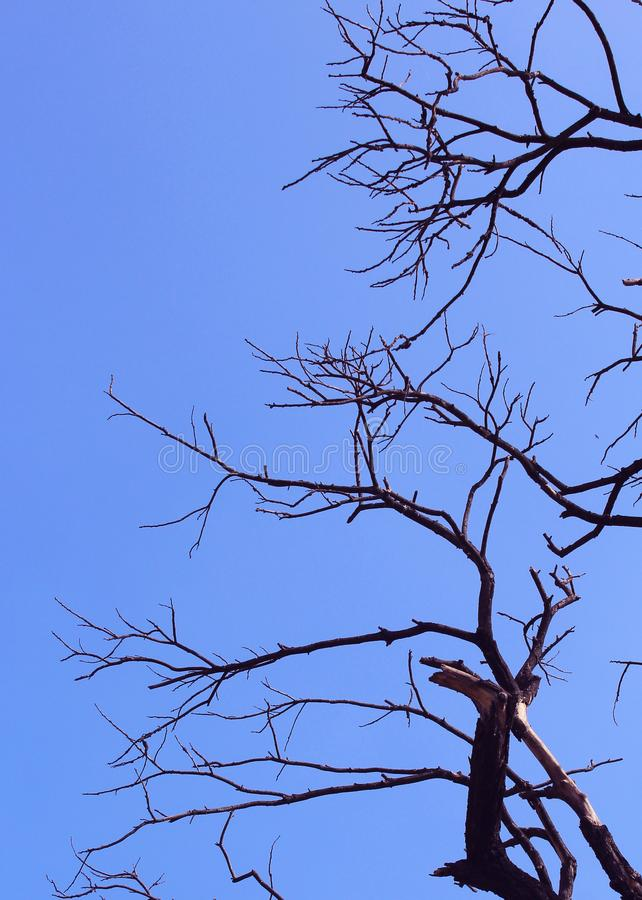 阴沉的死的树有天空背景 免版税图库摄影