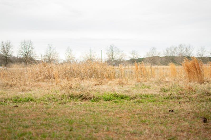 阴沉,草地在一阴天 库存照片
