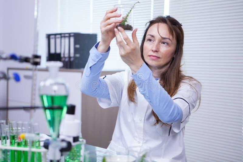 阻止土壤的样品女性科学家在农业研究实验室 免版税库存照片