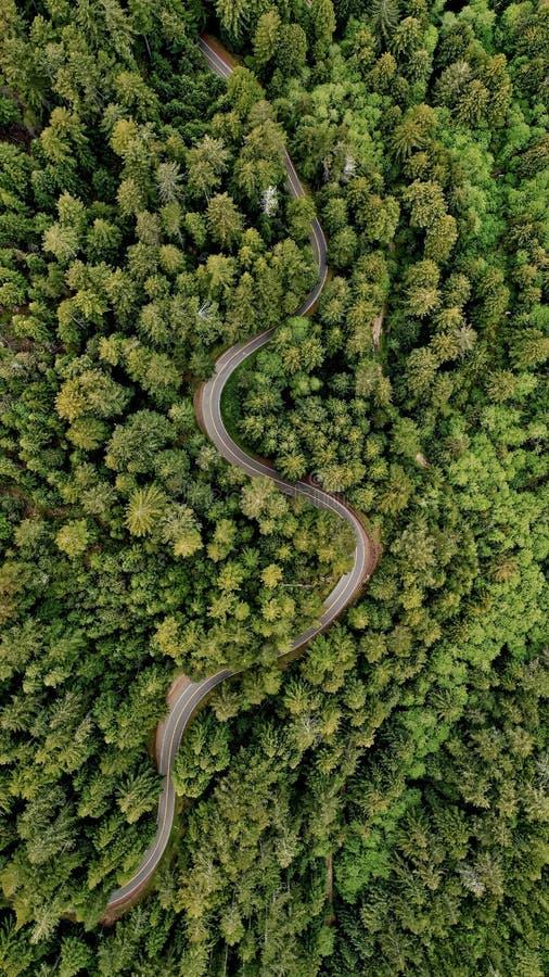 阿列尔射击了弯曲的窄路在树包围的森林中间 免版税库存照片